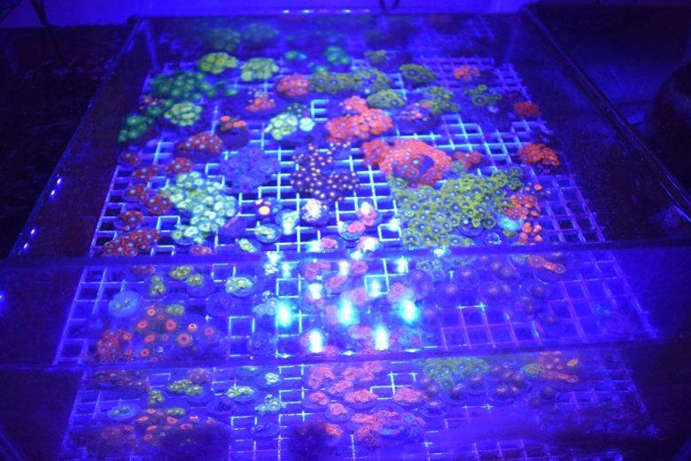 corales10
