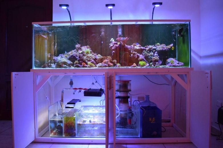 corales8